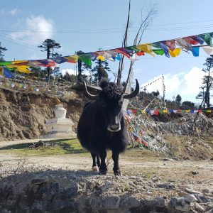 20190421 082201 300x300 - Bhutan - das Land des Donnerdrachens (Ost-West Durchquerung)