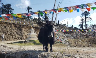 20190421 082201 410x250 - Bhutan - das Land des Donnerdrachens (Ost-West Durchquerung)